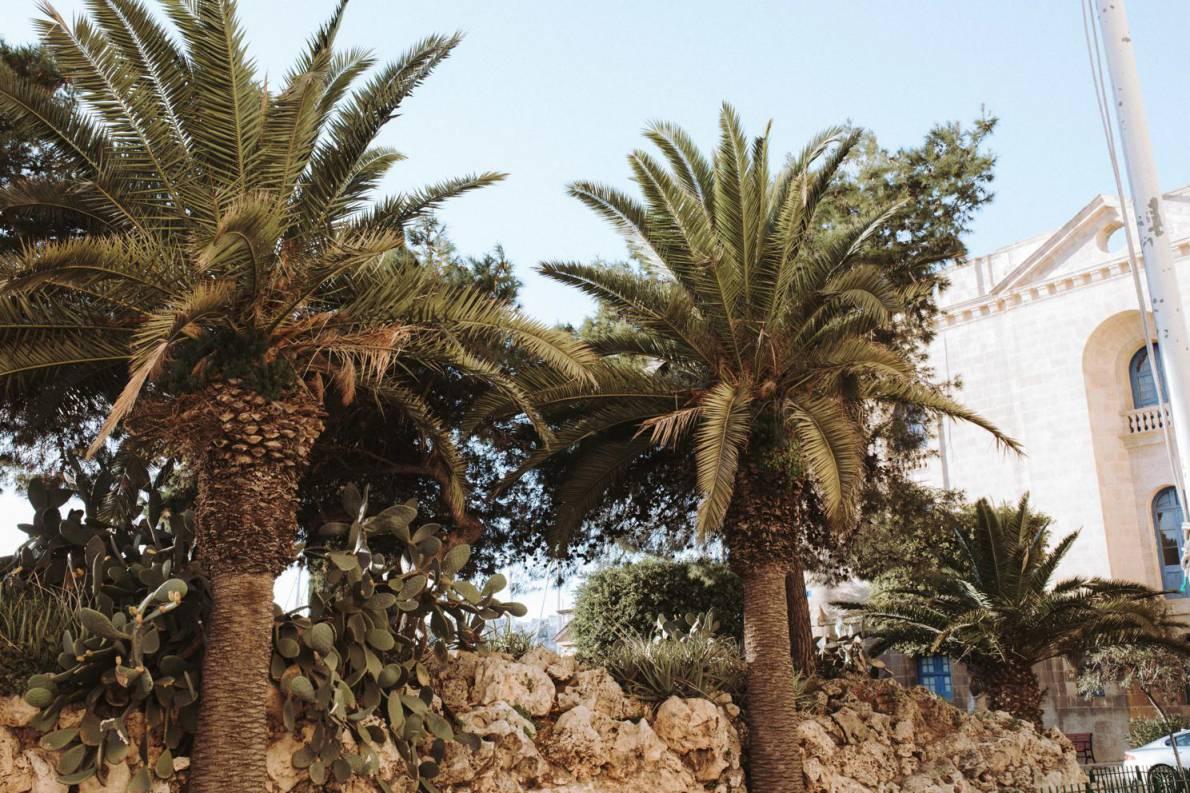Palmen auf Malta